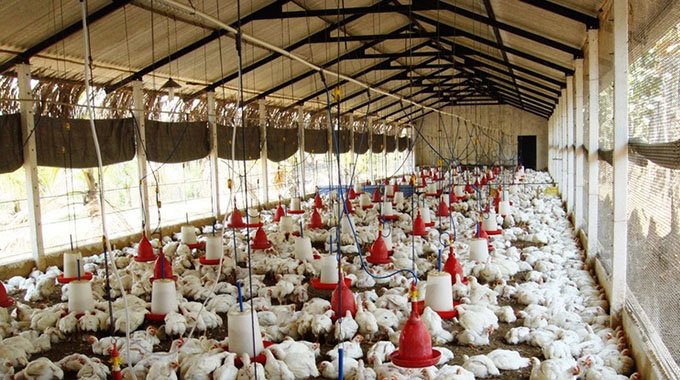 Poultry industry on high alert