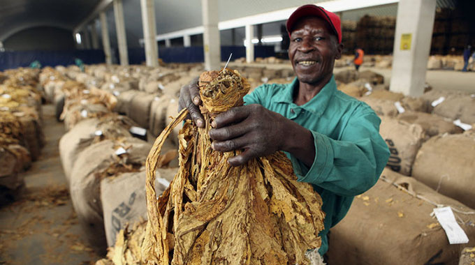 Tobacco deliveries increase as prices firm