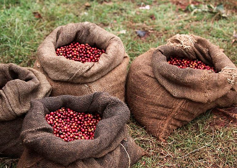Zim's coffee sector collapses