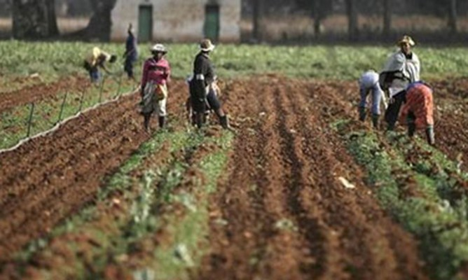 Farm workers demand 100% salary hike